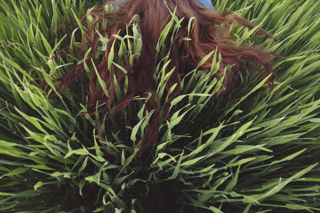 Hair Field Grass Creative Perspective Rare View People Green Color Nature Plant Agriculture Field Beauty In Nature Outdoors Leaf Cereal Plant Freshness Growth Red Hair High Angle View Break The Mold Art Is Everywhere TCPM The Portraitist - 2017 EyeEm Awards BYOPaper! Live For The Story