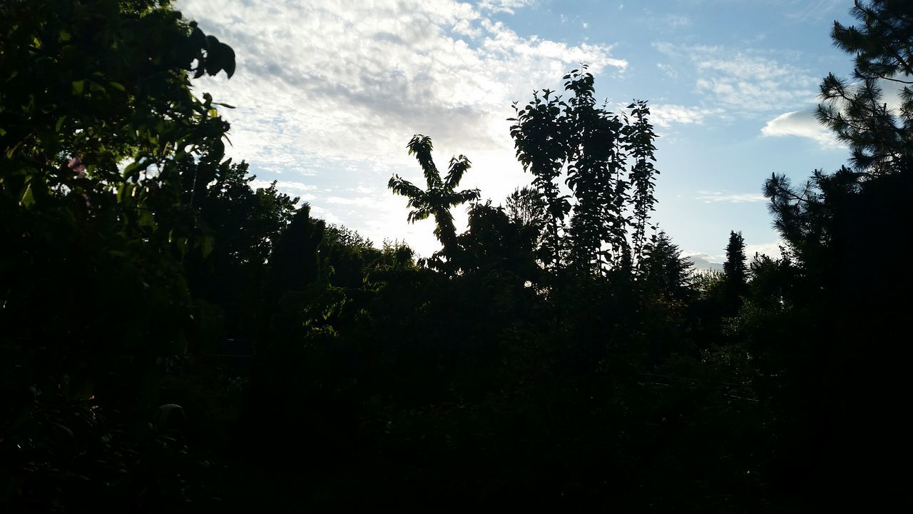 Out at parents, noticed the Apple Tree Tree had grown what looks like a Pot Leaf lol just a Silly Picture, hope you all enjoy and get a good laugh' thanks for checking it out' Silly Pic Taking Photos Nature Photography Nature_collection Eyem Gallery TreePorn Sky And Trees Sunset Silhouettes Sky And Tree Collection Natures Beauty by Adam O Natures Diversities