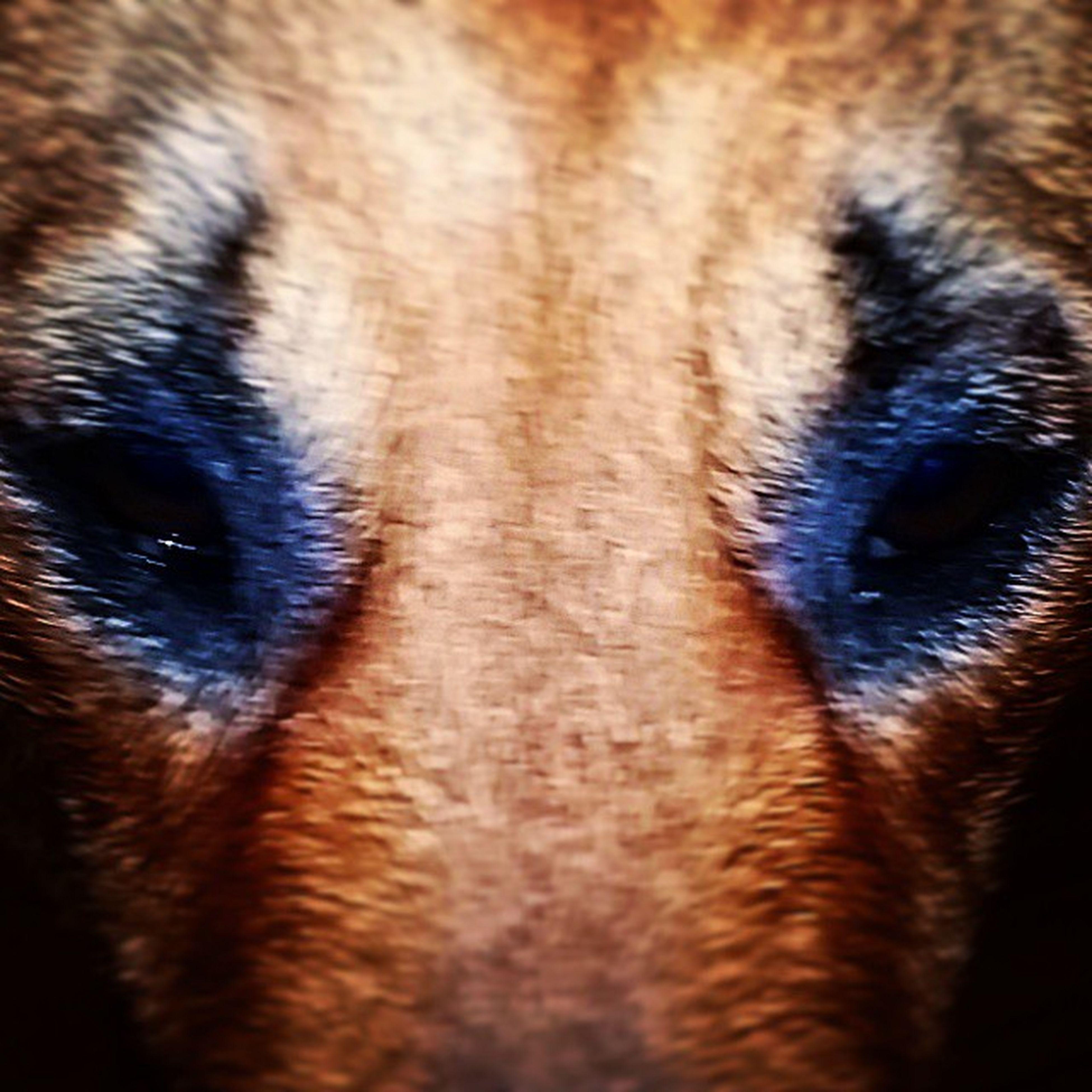 animal themes, one animal, animal body part, animal head, close-up, part of, domestic animals, animal eye, mammal, full frame, extreme close up, backgrounds, wildlife, detail, animal nose, extreme close-up, pets, cropped, horse, animal hair