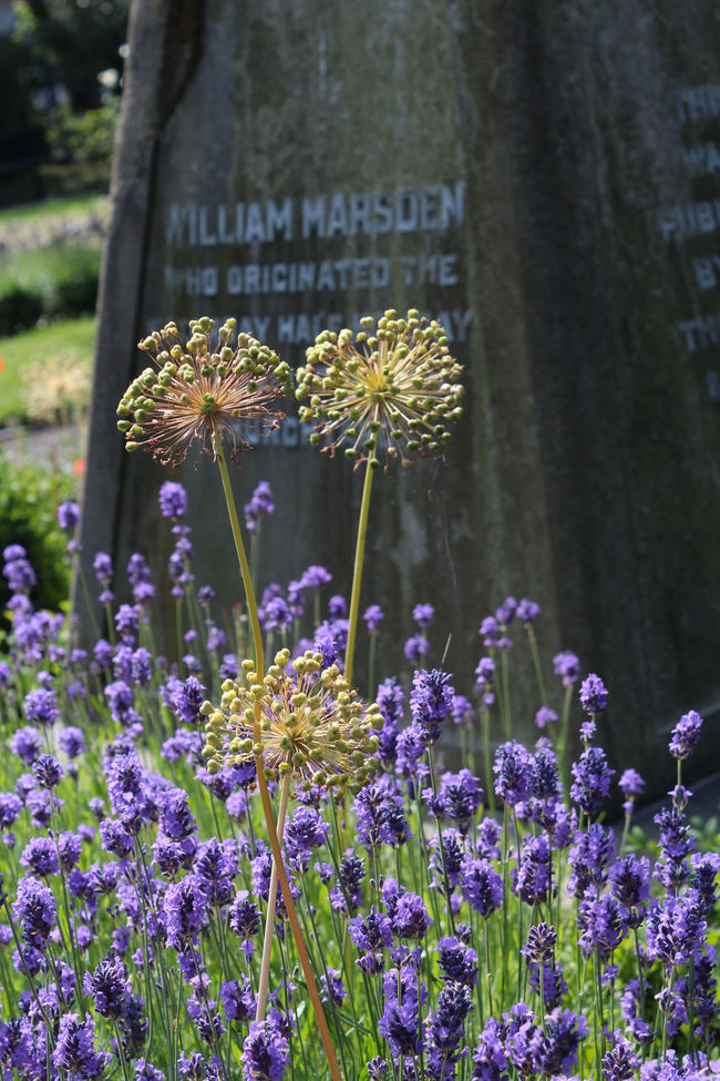 Passing time Flowers Garden Grave Gravestone Graveyard Beauty Nature Old Purple Spring
