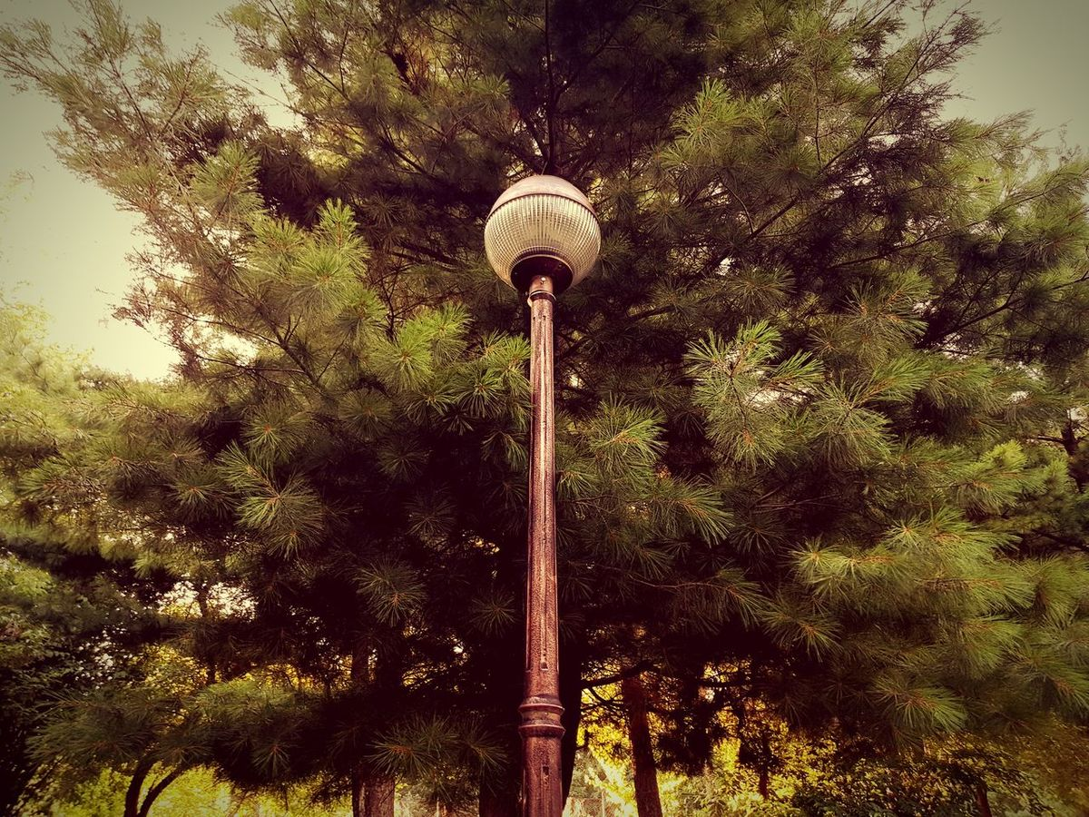 Head Light Tree Green Color Day Outdoors No People Low Angle View