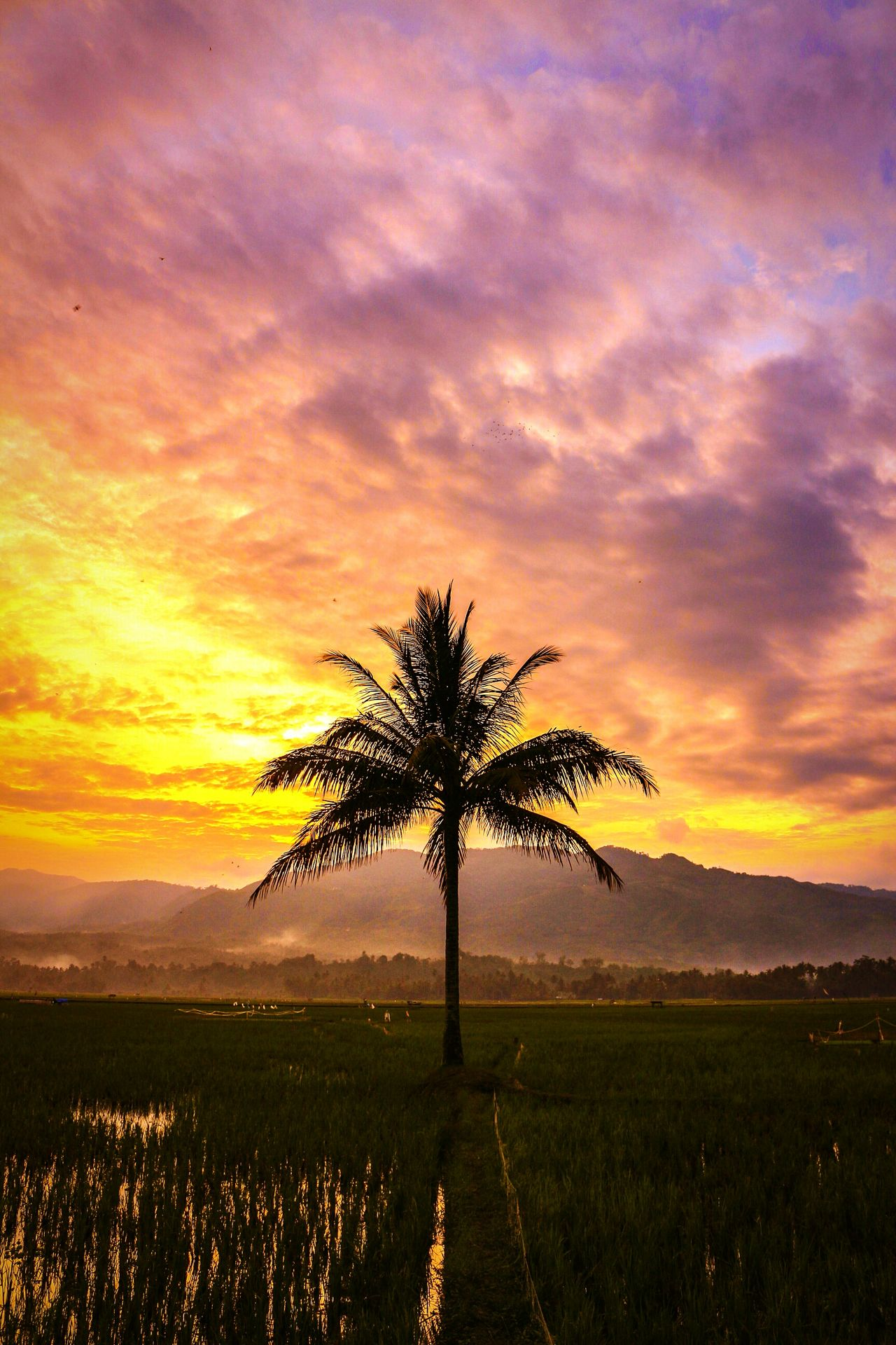 One lonely coconut tree Tree Nature Sky Beauty In Nature Wonderfulindonesia Photography Twilight Sunset Dramatic Sky