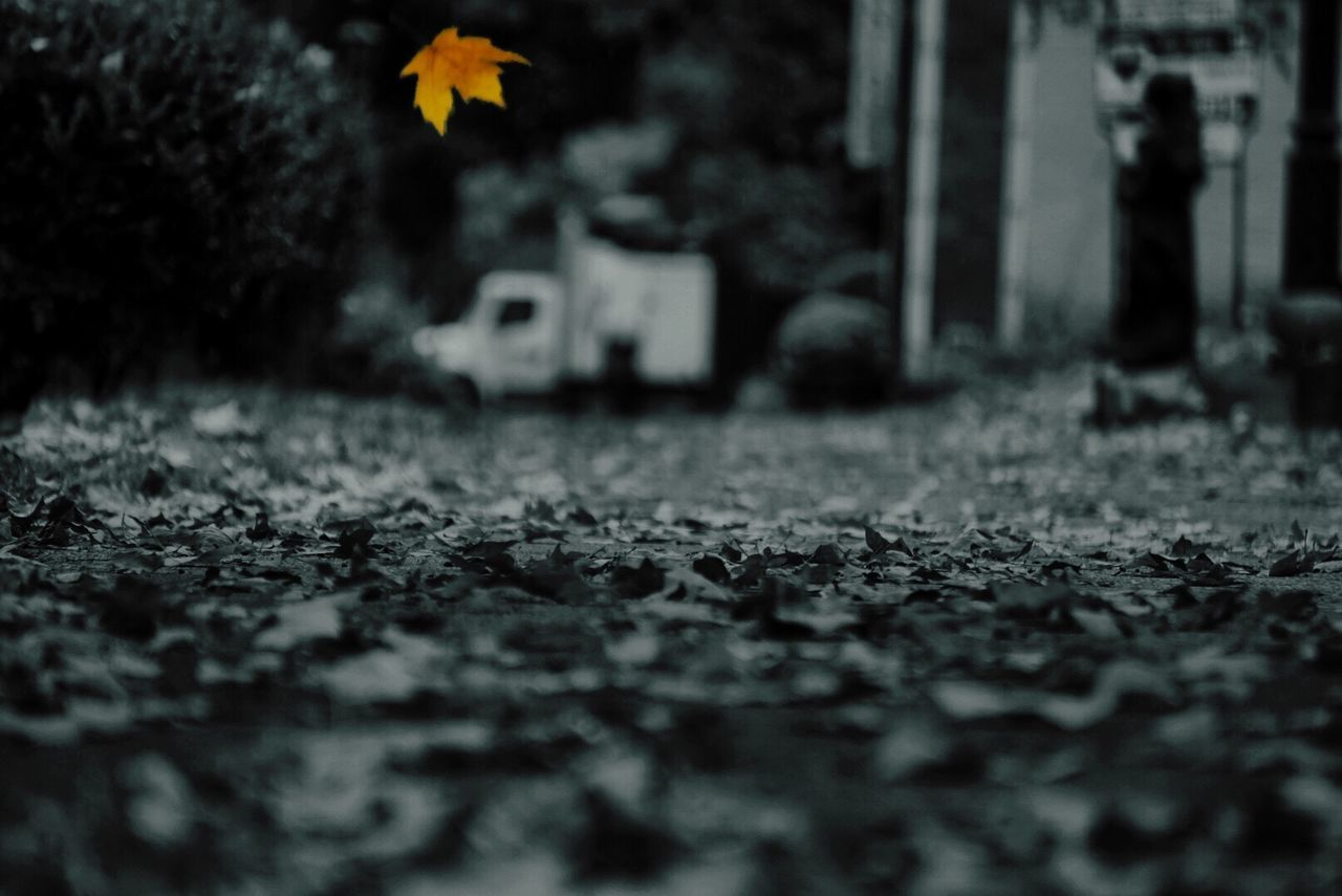 selective focus, cemetery, tree, outdoors, day, transportation, nature, no people, leaf, grass, beauty in nature, close-up