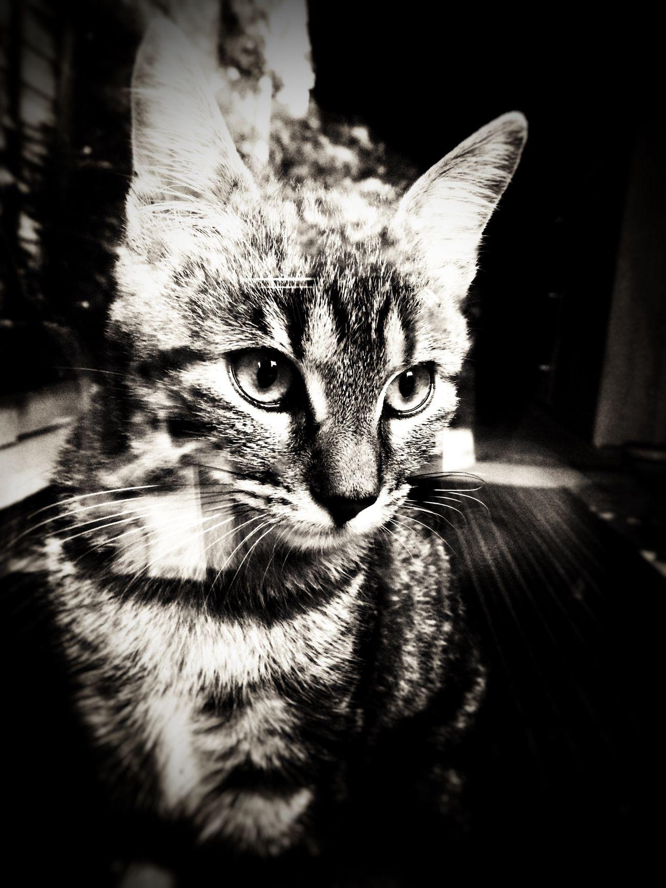 Murph... Kitten Katzen Blackandwhite Photography