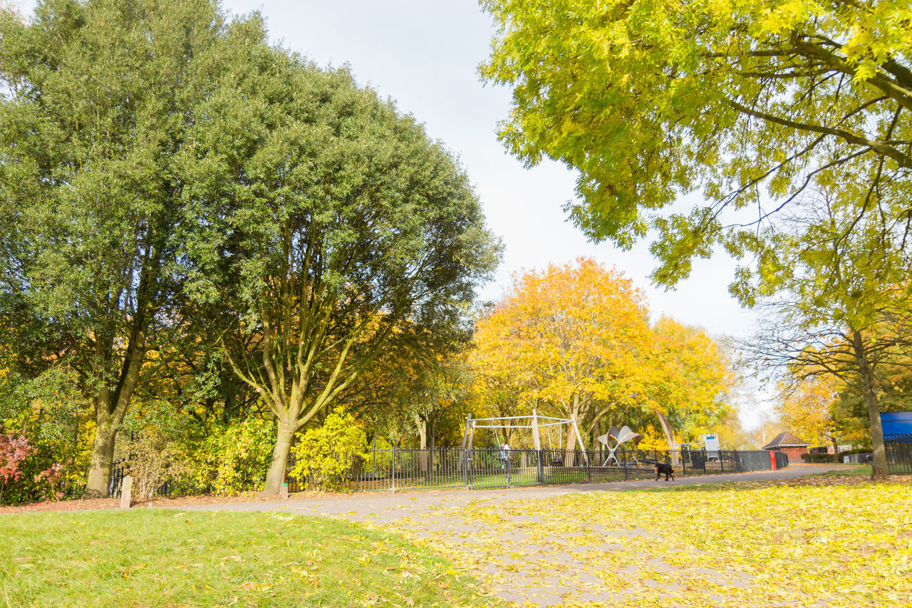 tree, autumn, nature, beauty in nature, grass, leaf, growth, change, yellow, tranquility, outdoors, green color, park - man made space, day, landscape, scenics, branch, no people, sky