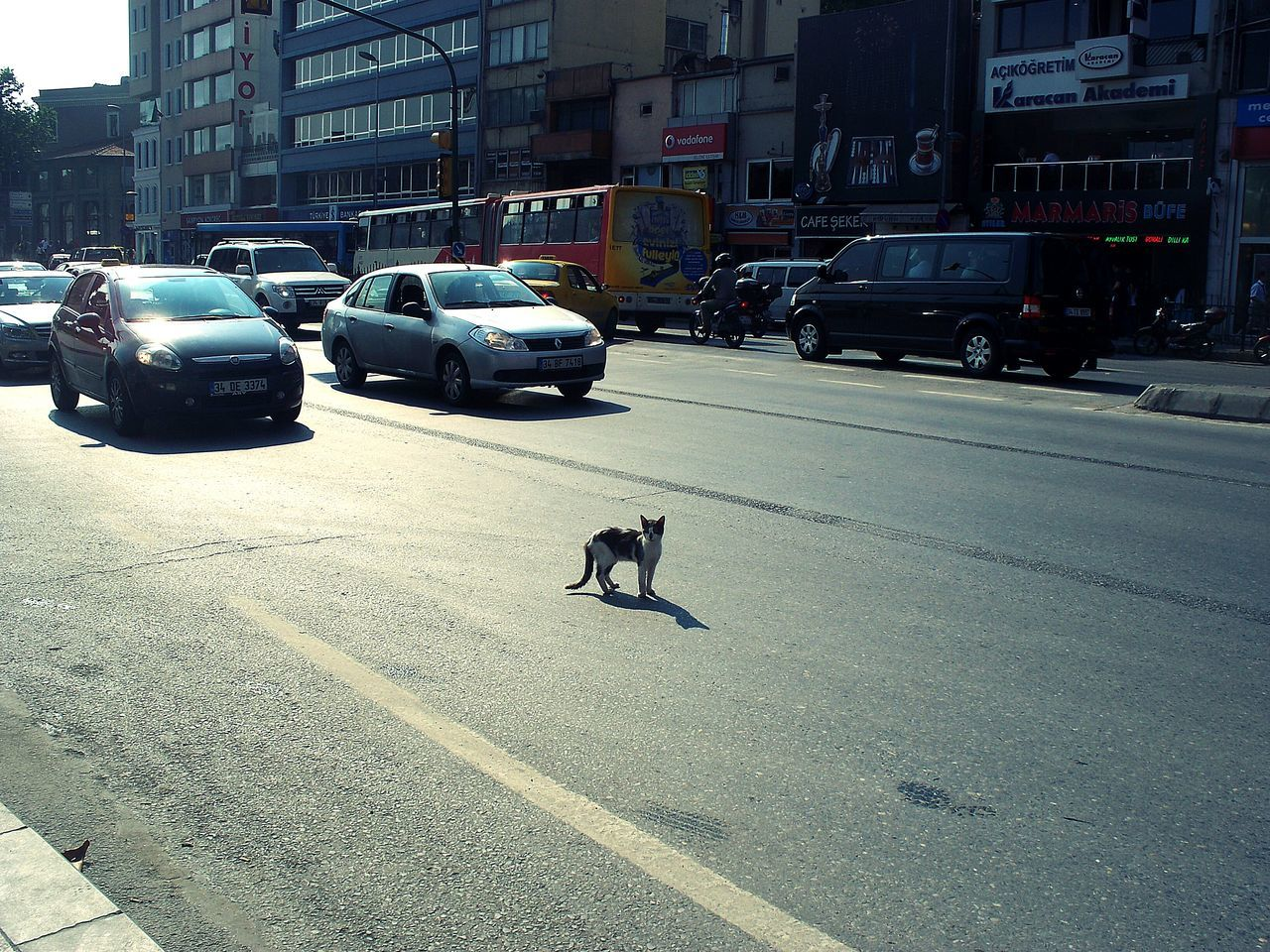 Outdoors Built Structure No People Cat Kitten Kity Animal Themes Day Nature Car City Building Exterior Street Photograph Beşiktaş ❤ Istanbul Türkiye The City Light 3XSPhotographyUnity