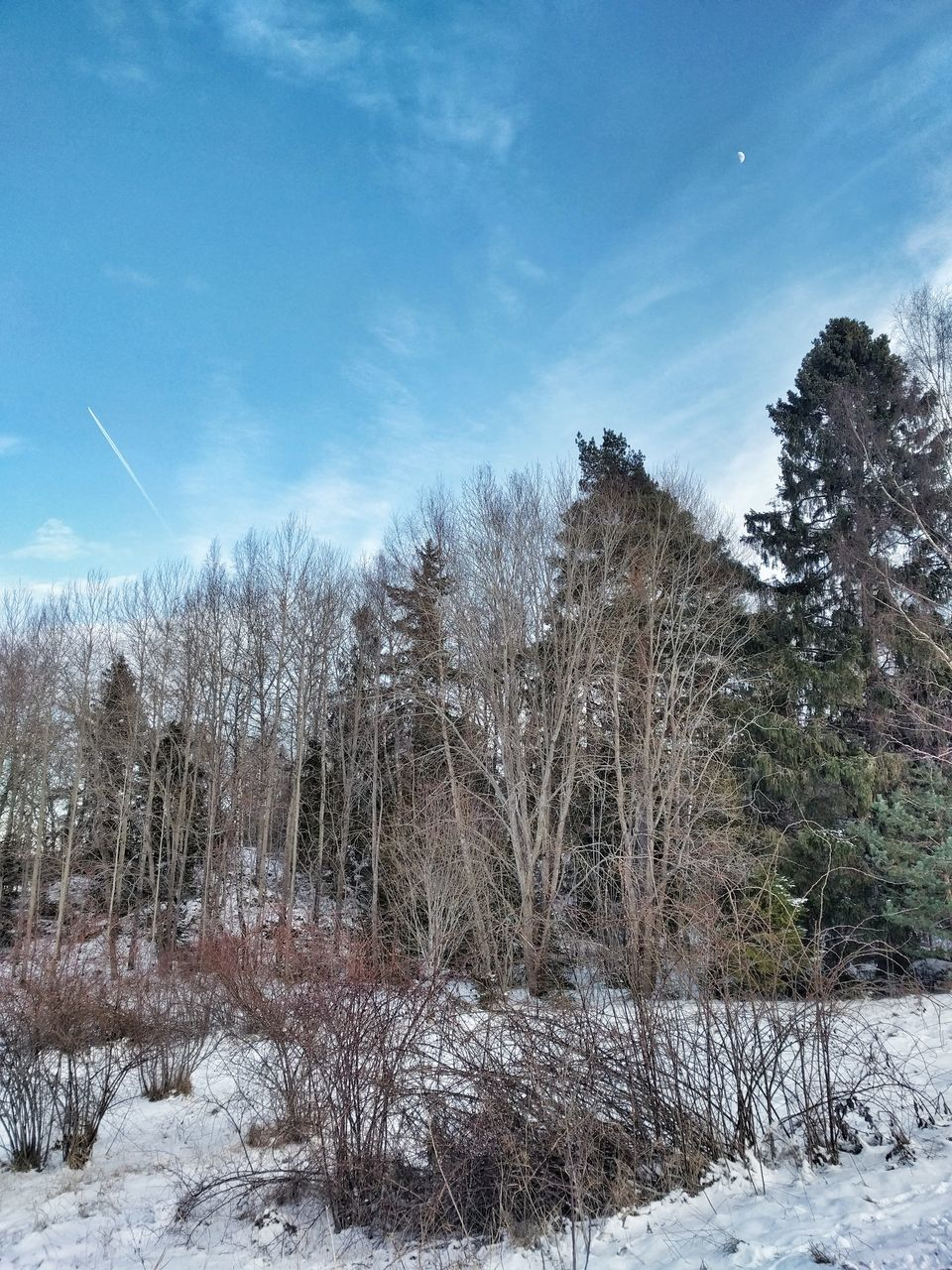 snow, winter, cold temperature, nature, weather, beauty in nature, tree, tranquility, scenics, tranquil scene, cold, frozen, no people, day, outdoors, white color, bare tree, landscape, sky, snowdrift