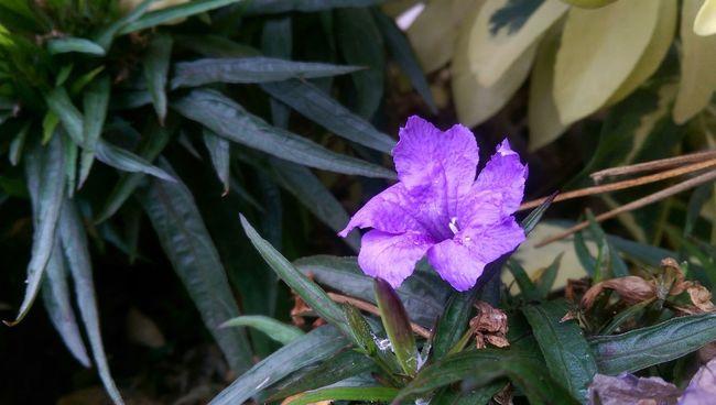 Flower Flowerporn Purple Flower Purple Mobilephotography Beautiful