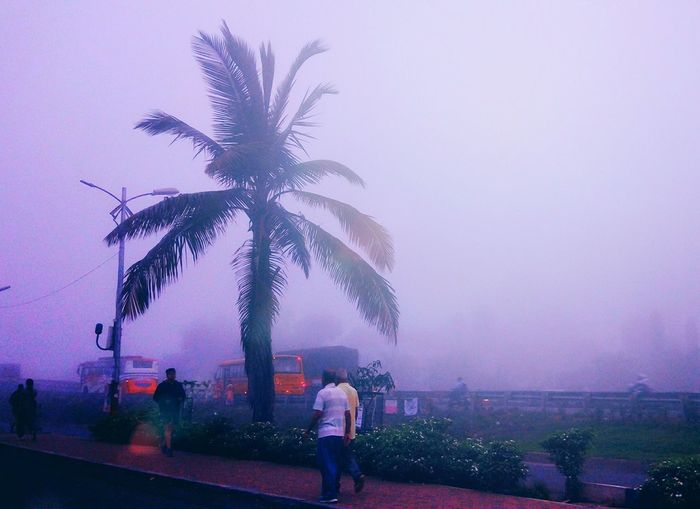 Tree Adult People Women Outdoors Palm Tree Men Adults Only Sky Foggy Morning Highway Morning Walk