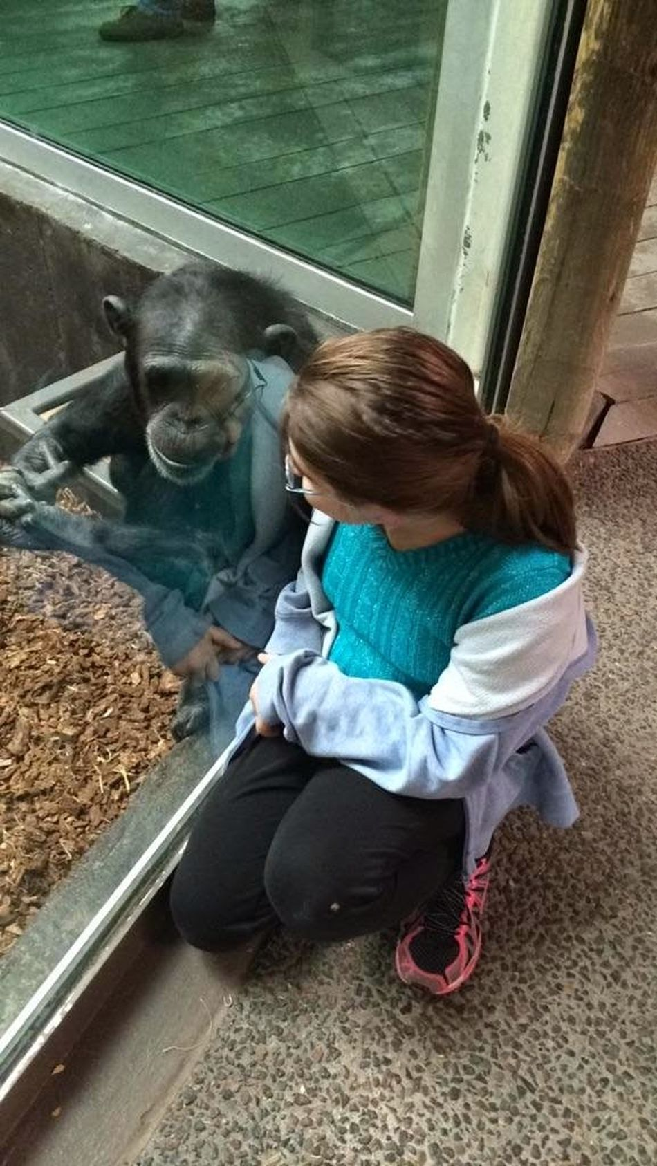 Full Length One Person High Angle View Sitting One Girl Only Outdoors Day Nature Glass Windows With Reflections Glass Reflections Friendship Animal Themes Making Friends Bonding Mammal One Animal Child And Wildlife Chimpansee Looking Through Girl Animal Reflections Close-up Togetherness Childhood