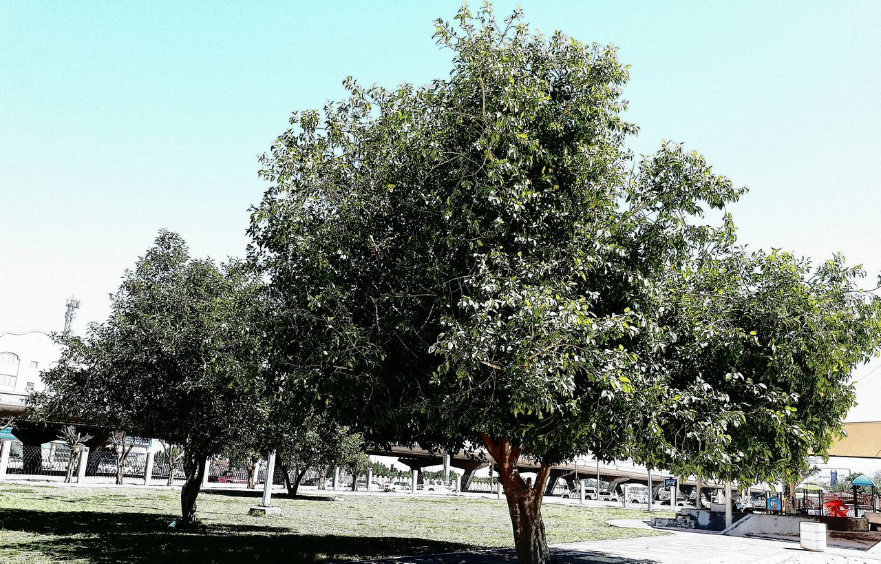 tree, growth, clear sky, nature, outdoors, day, sky, no people