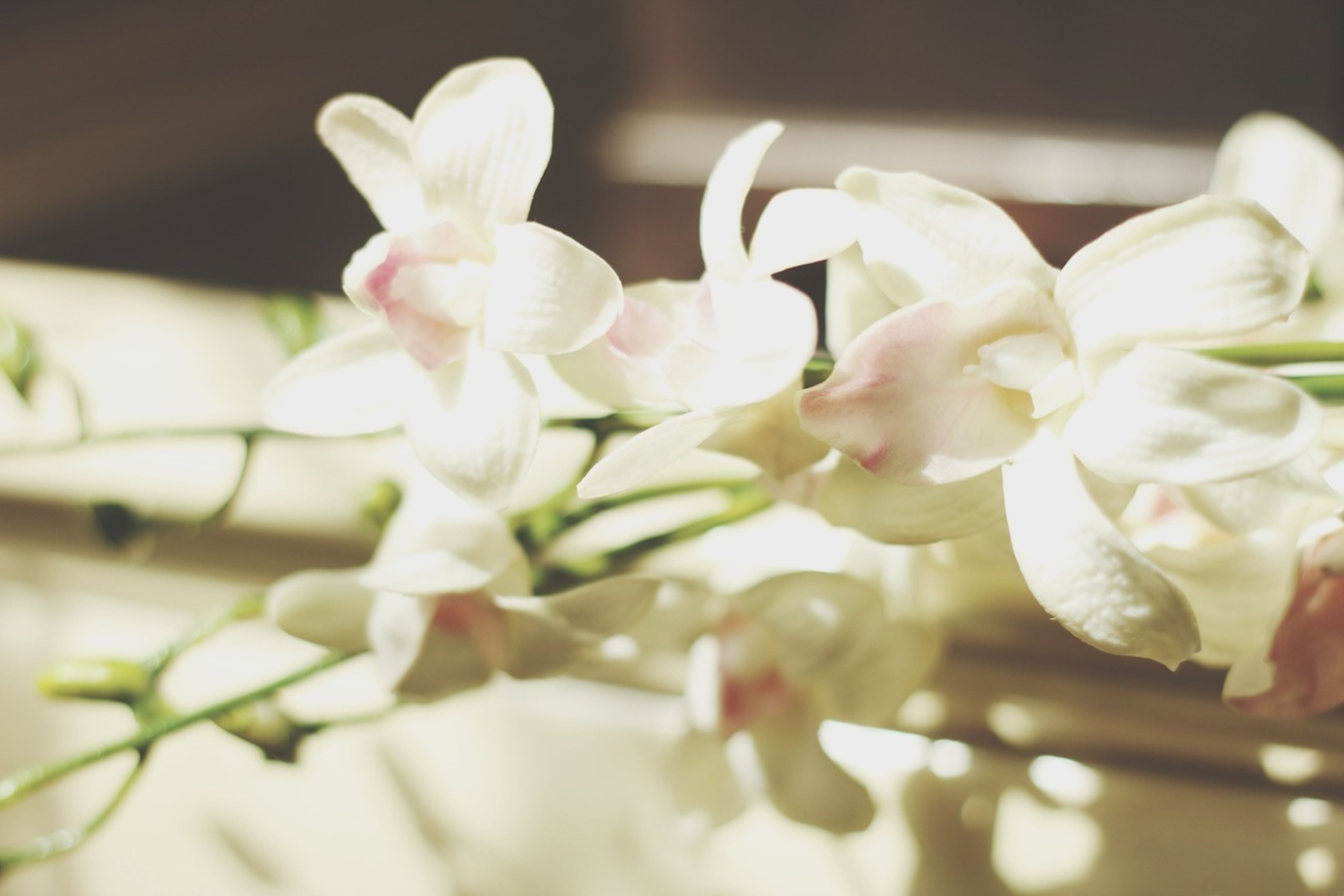 flower, petal, freshness, fragility, flower head, close-up, indoors, white color, beauty in nature, growth, nature, blooming, selective focus, focus on foreground, plant, in bloom, blossom, no people, vase, orchid