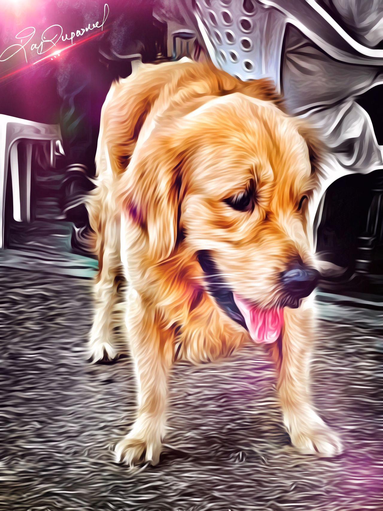 Pets Pet Photography  Worldofbeauty Love Photography Myalbum Myedits MyClick Passion