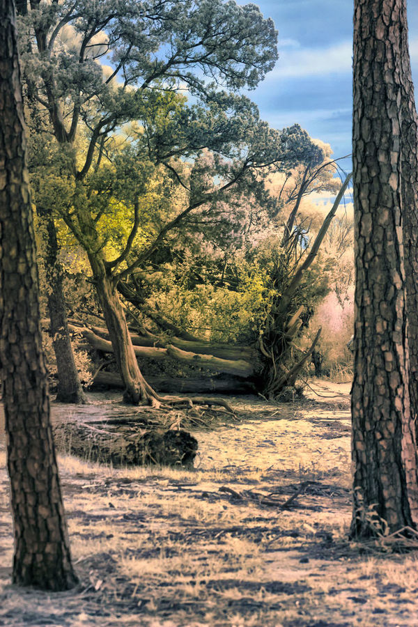 Beauty In Nature Growth Infrared Photo No People Outdoors Scenics Solitude Tree WoodLand
