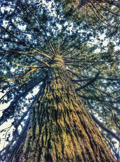 My friend the tree - mein Freund der Baum Wiesbaden Fasanerie