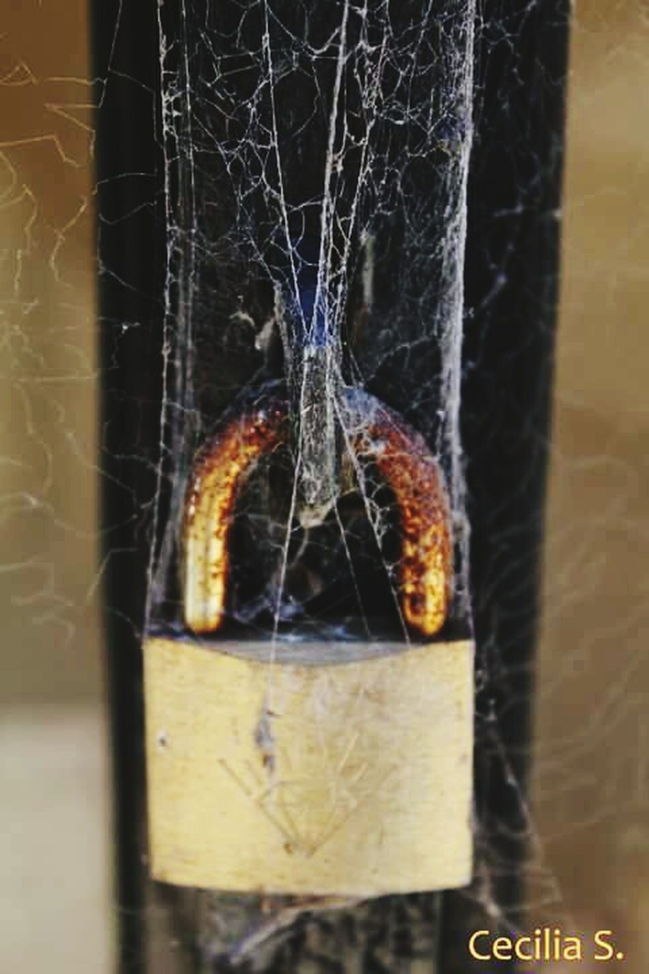 close-up, spider web, focus on foreground, complexity, night, no people, outdoors, window, fence, metal, pattern, danger, wood - material, hanging, full frame, rusty, damaged, backgrounds