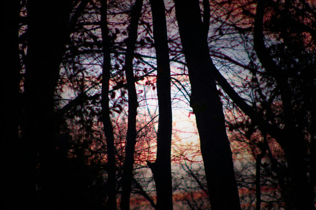 Jersey Times Sunset Throughthetrees ColdTimes Jeresy Check This Out Sunset_collection Sitram Photo's Nature Woods Trees