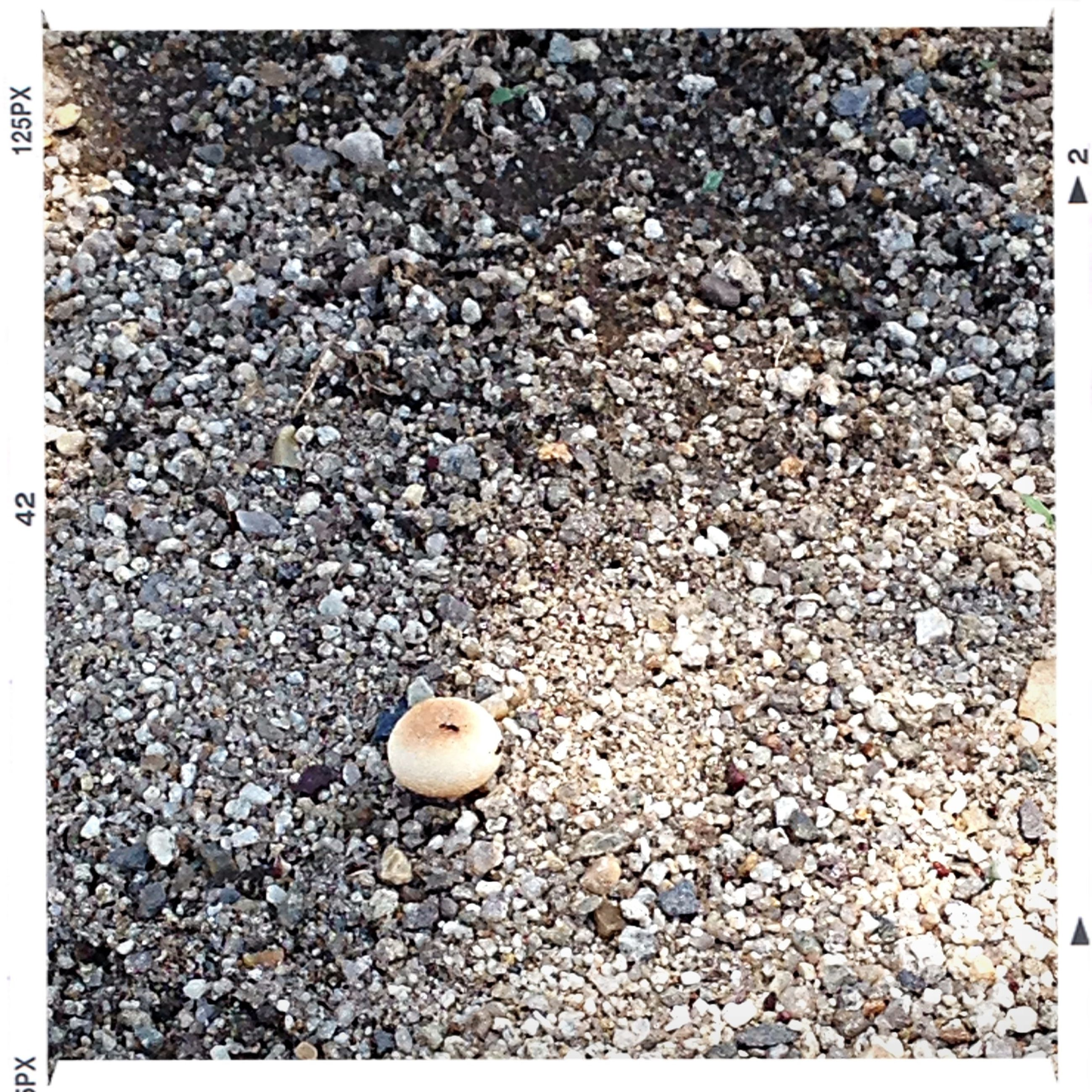transfer print, auto post production filter, high angle view, pebble, stone - object, ground, abundance, nature, textured, dry, large group of objects, day, no people, outdoors, close-up, full frame, backgrounds, street, dirt, stone