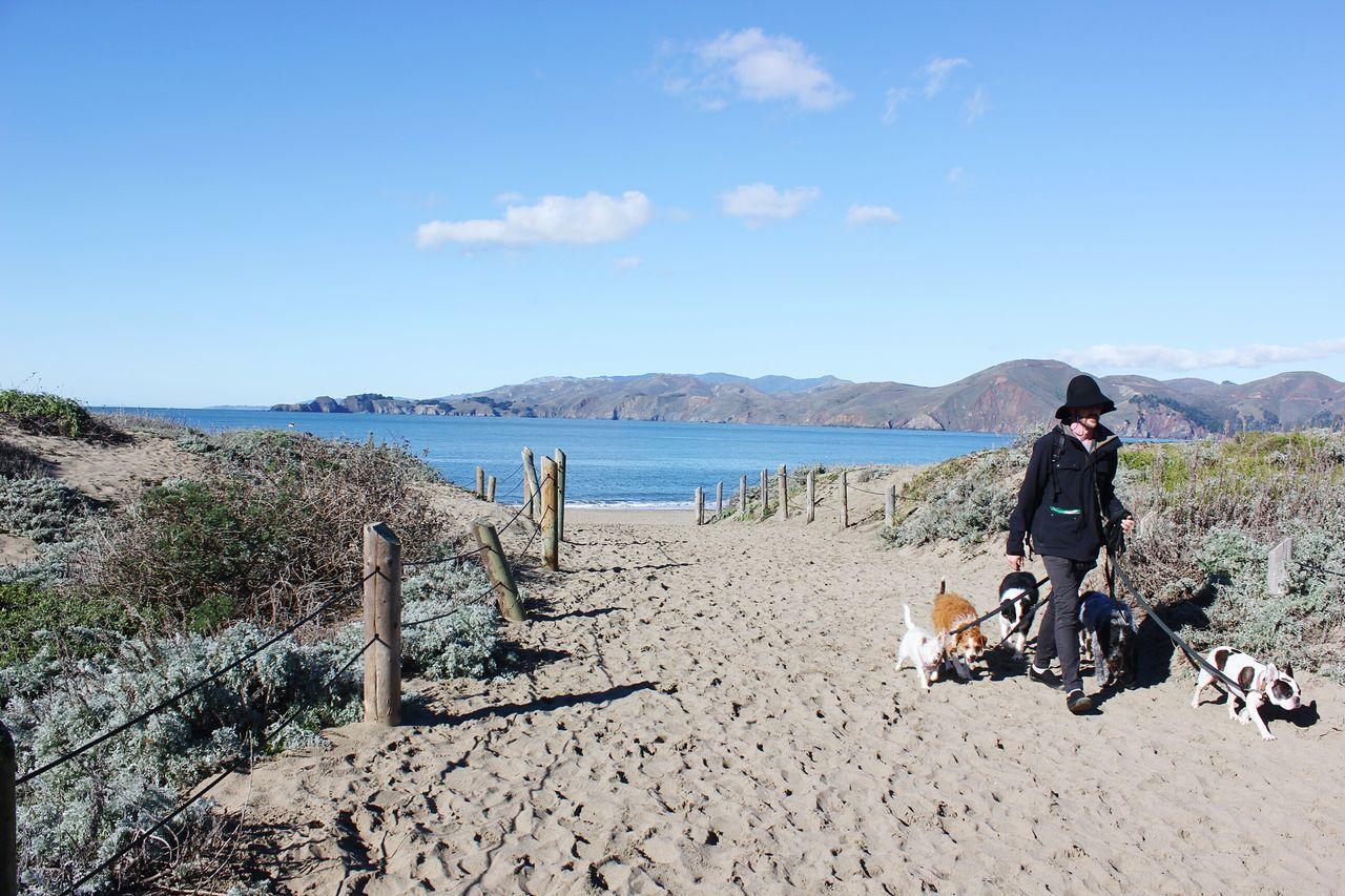 This Week On Eyeem Dog Dog Walker Baker Beach SF San Francisco San Francisco Bay Uniqueness