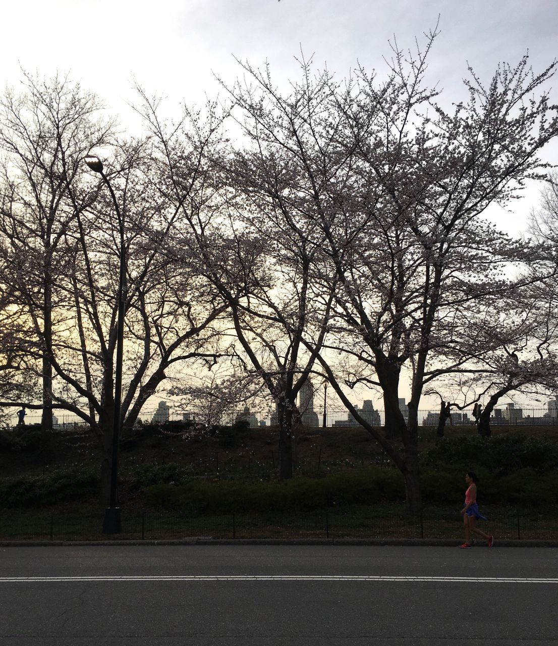 tree, one person, bare tree, real people, road, outdoors, full length, day, leisure activity, sky, lifestyles, transportation, women, nature, branch, adult, people