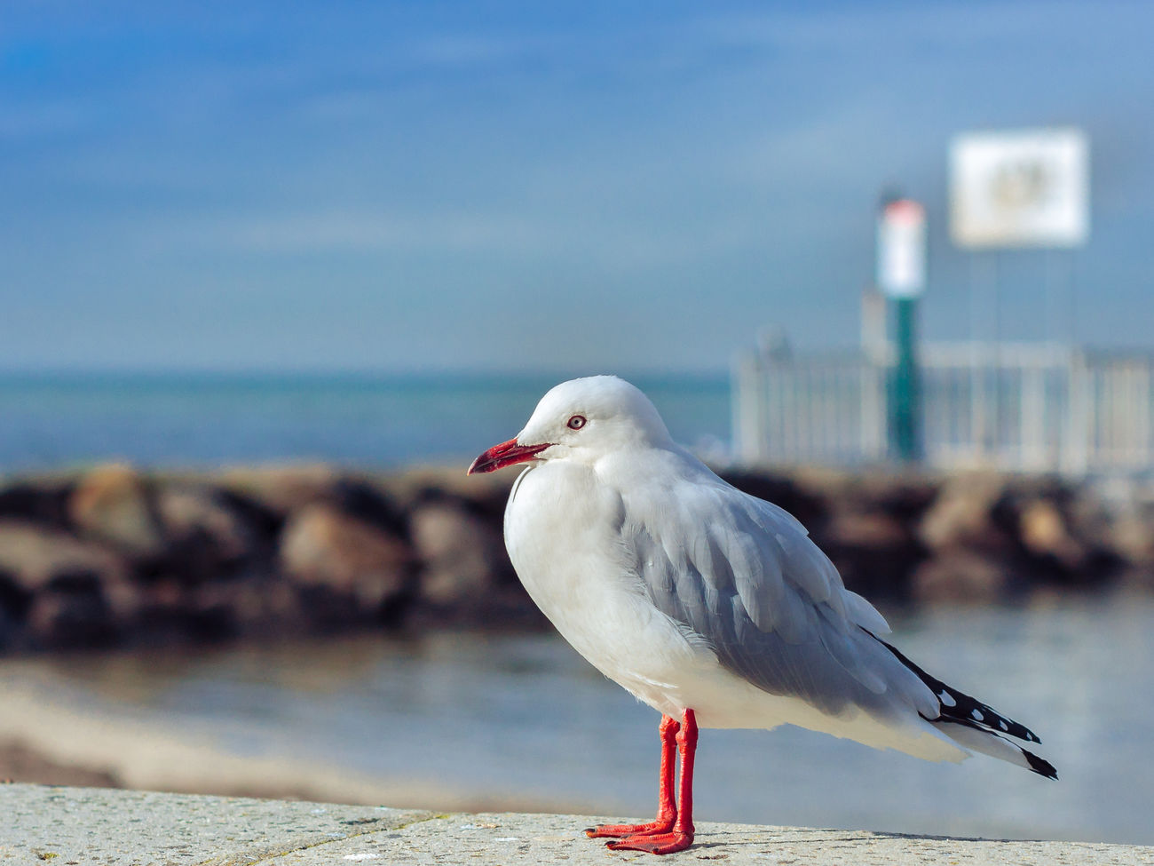 Bird Focus On Foreground No People Outdoors Pier Sea Bird Seagull Seashore White Color