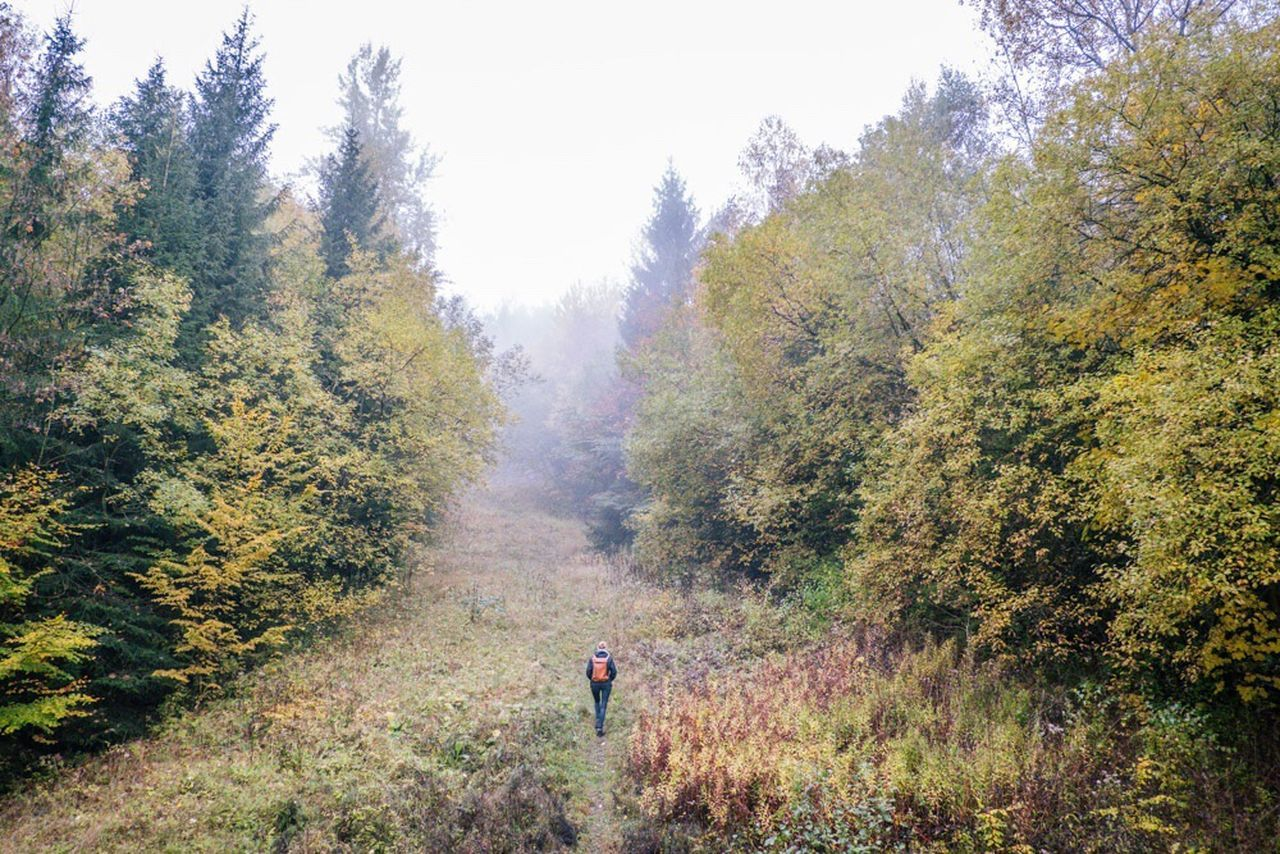 Tree Nature Hiking Beauty In Nature Forest Outdoors Growth The Way Forward Grass Footpath Tranquility Real People Day One Person Landscape People Adventure Mountain Young Adult Adult Deister Wandern Roaming Nature Wanderlust