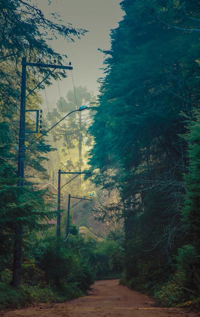Campos do Jordão Brasil. Camposdojordao Country Road Eyeemphotography Shotoftheday Dreamy The Wild Trees Campos Do Jordão Brasil ♥ Brasil_greatshots