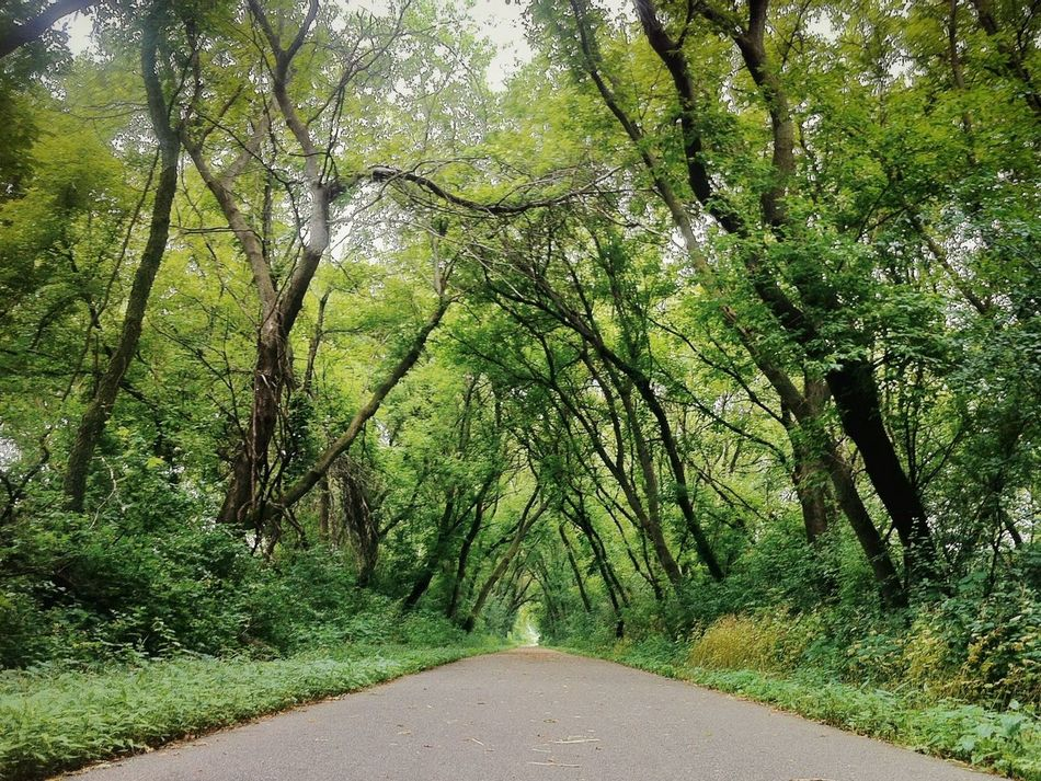 Beautiful stock photos of road, Beauty In Nature, Branch, Day, Diminishing Perspective