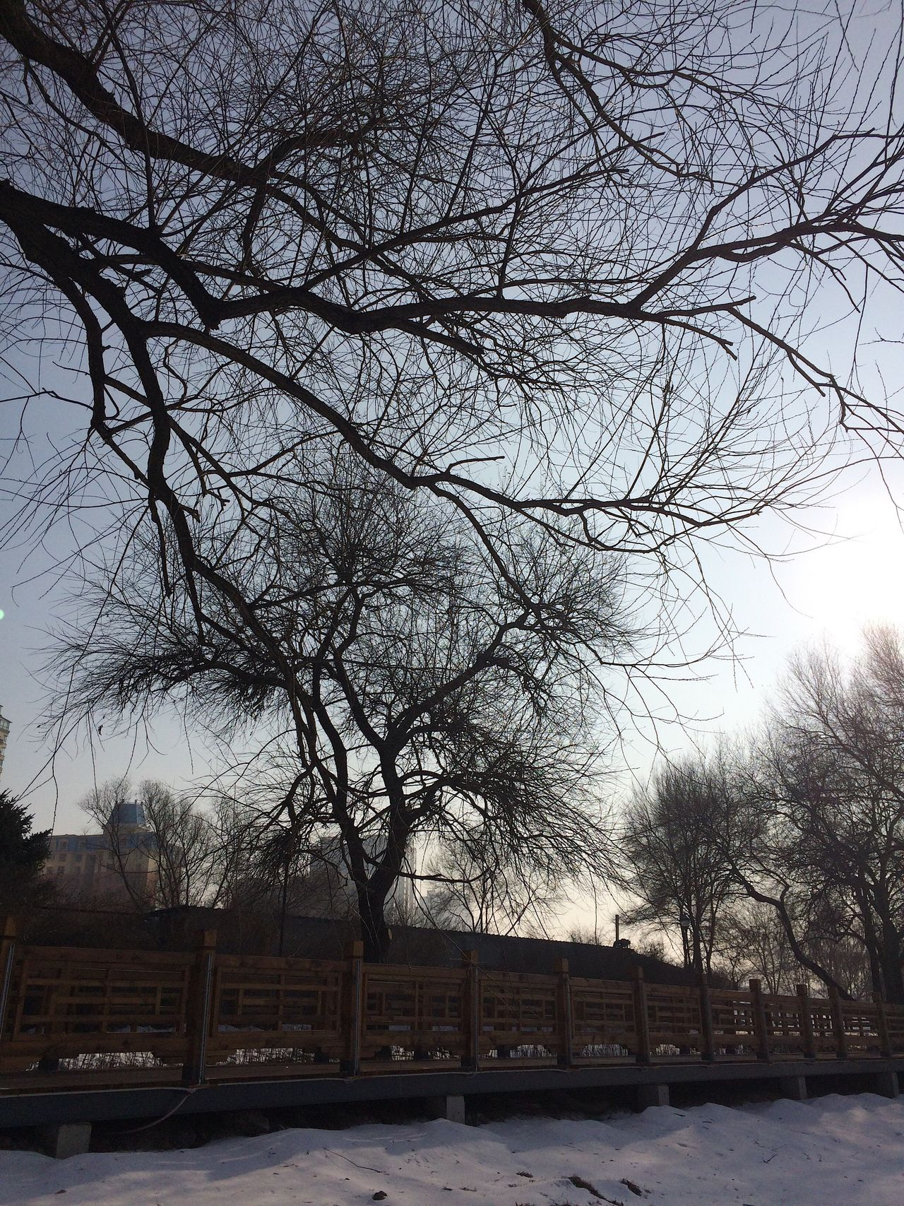 The winter sun Tree Nature Snow Winter Outdoors Beauty In Nature