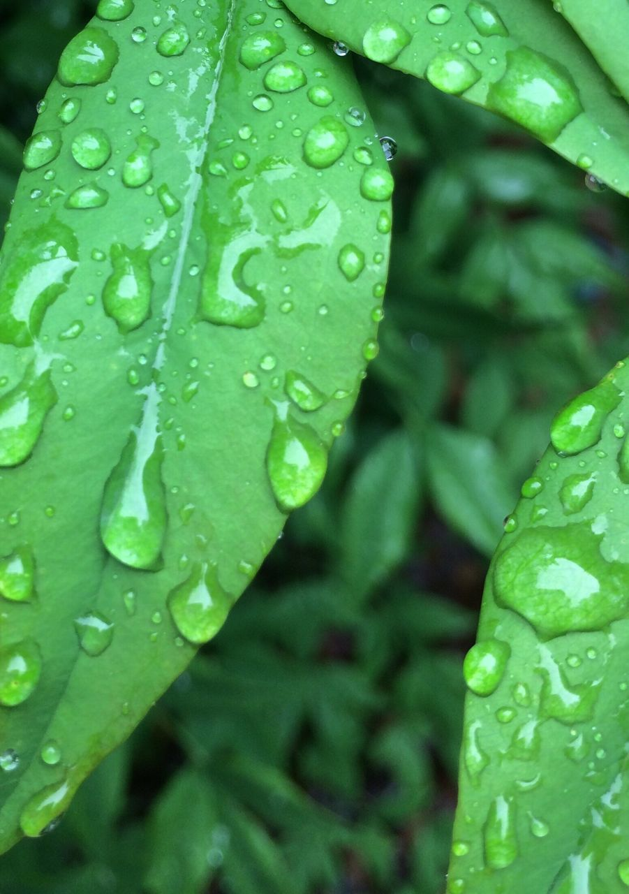 drop, water, wet, green color, leaf, freshness, raindrop, growth, close-up, nature, day, beauty in nature, no people, fragility, plant, outdoors, purity