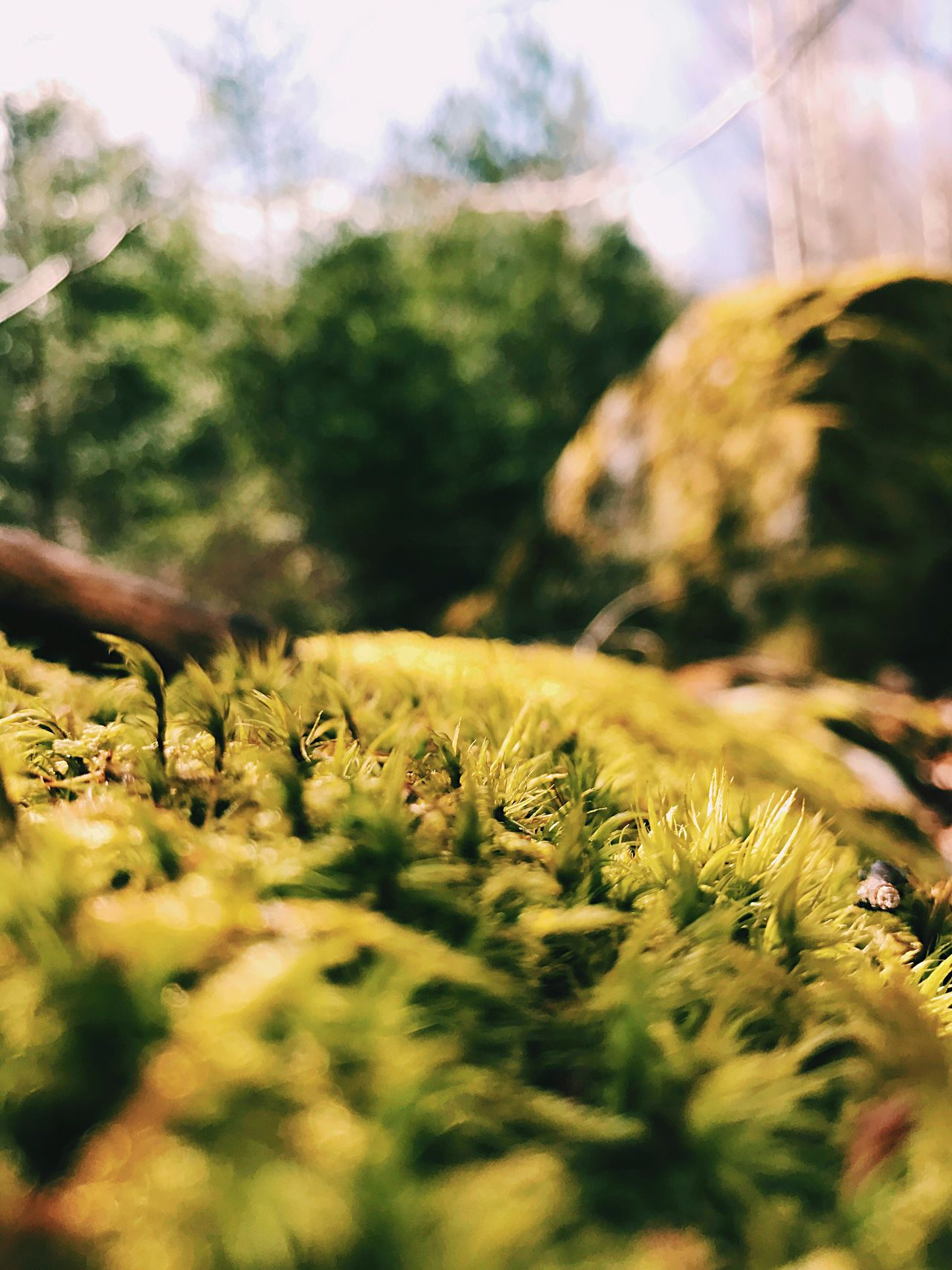 Moss in close up. Selective Focus Growth Plant Nature Day No People Tree Close-up Outdoors Beauty In Nature Fragility Flower Sky Freshness Moss Mossporn Moss-covered Mossy Nature Photography