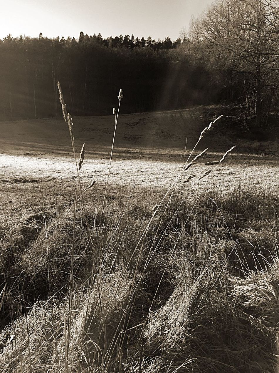 Grass Nature Beauty In Nature Blackandwhite Landscape Iphonephotography IPhoneography Nature Morning Jonsered Outside Taking Photos Outside Photography Sweden Morning Light View Cloud - Sky Showcase December Outdoors Walking Around Taking Pictures Winter Morning Winter Winteriscoming 2016