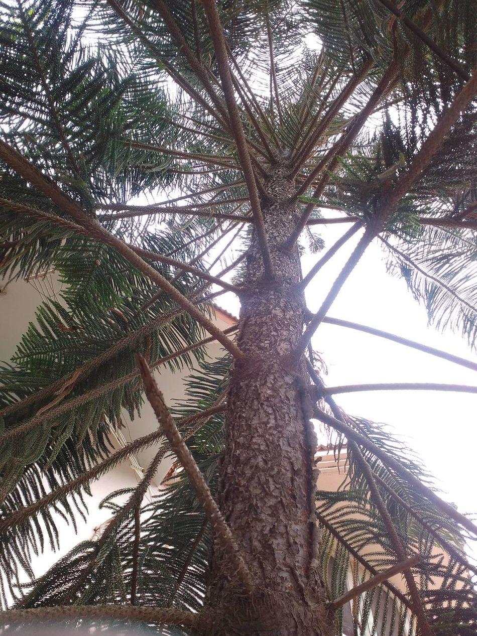 Tree Outdoors Outdoor Photography PhonePhotography 8MP Photography Tuticorin Tn India