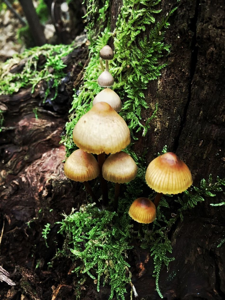 Mushroom Fungus Toadstool Growth Nature Forest Green Color Beauty In Nature Tranquility Outdoors Close-up Tree No People Day Freshness