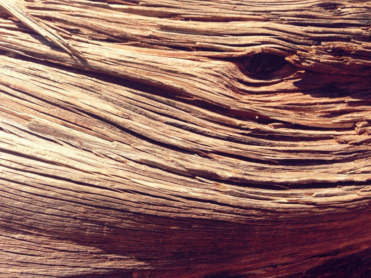 Woodground Wood Eye