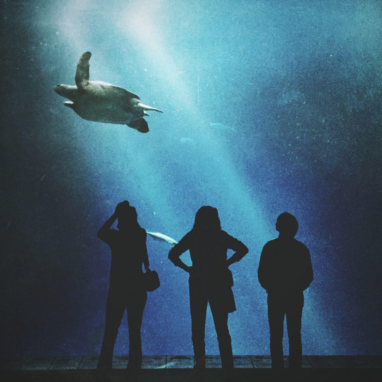 Beautiful stock photos of turtle, Aquarium, Auto Post Production Filter, Black, Blue