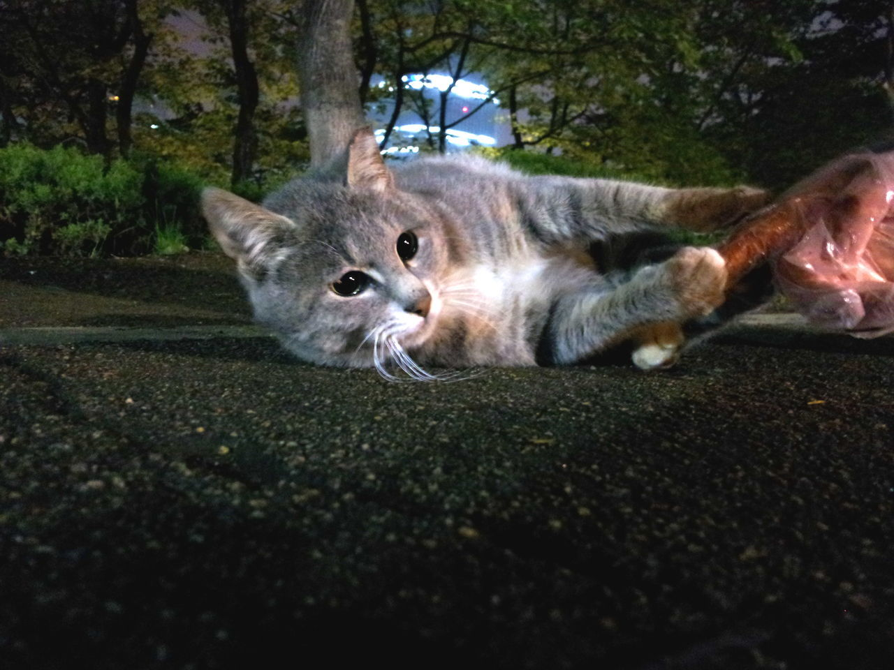Animal Themes Cat Domestic Animals Feral Cats Nature No People Pets Seokchon Lake Cats The Cat And The People Feral Cats People And Sympathy Cat Love Appearing In The Night Cats