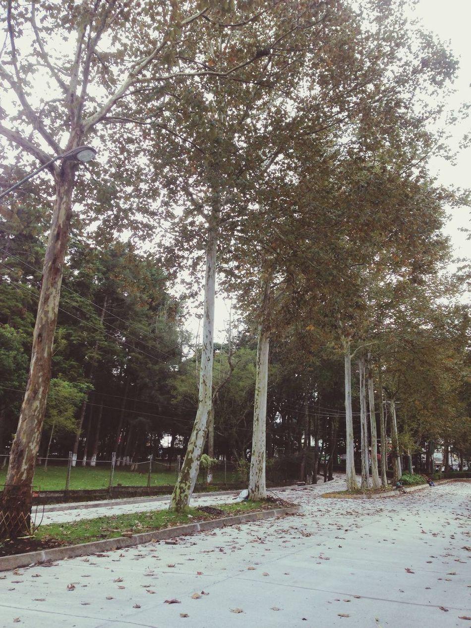 LatinAmerica Day Trees Urban Streetphotography Street Hayas
