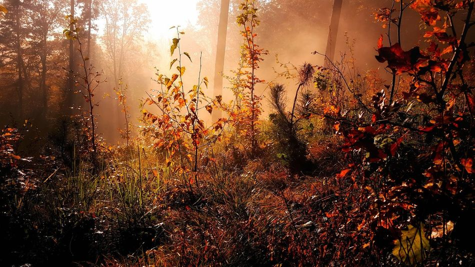 Sunny forest morning Beauty In Nature Close-up Forest Grass Growth Nature No People Outdoors Plant Scenics Sun Sunrise Tranquility Tree