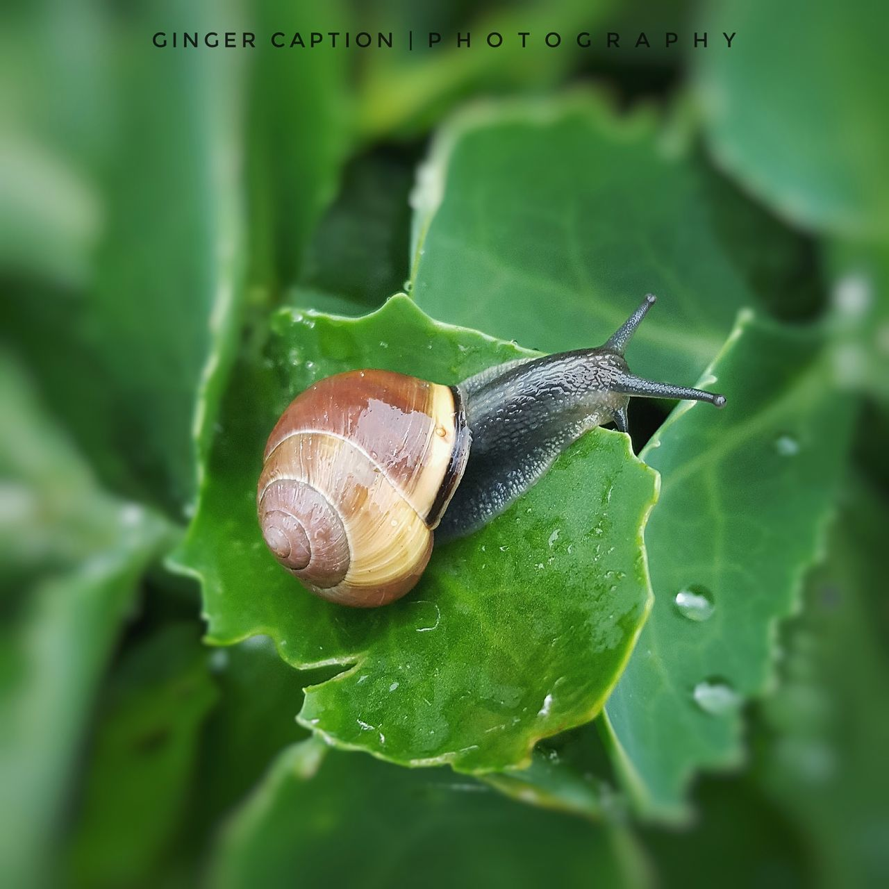 Home - Insect Leaf Green Color Animal Themes Animal Wildlife Nature Outdoors Close Up Photography Macrophotography Macro_collection Macro Beauty Macro Photography MyPhotography Nature Photography Beautiful Nature Nature_collection Macro_captures Beauty In Nature Macroporn EyeEm Best Shots Green Waterdroplets Macro Close-up Snail🐌