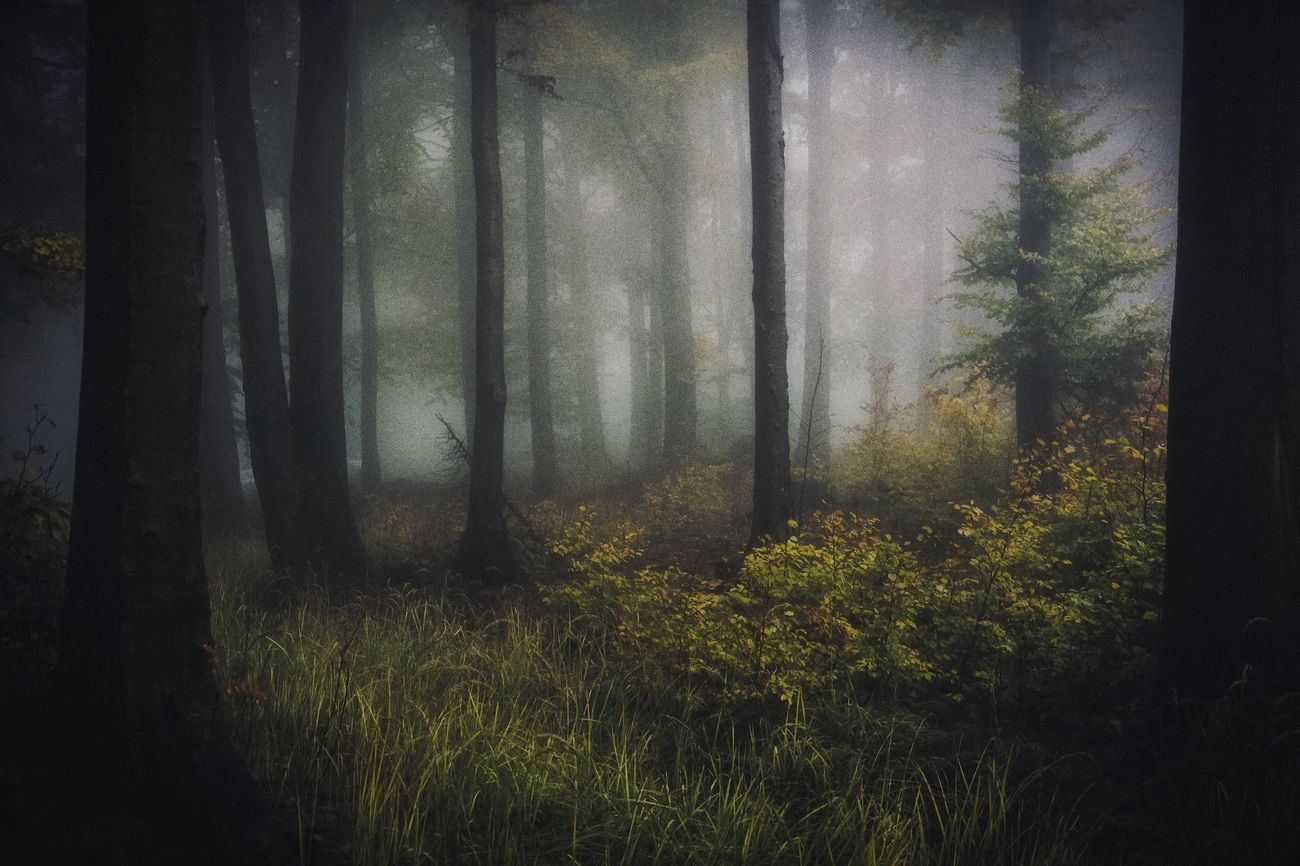 Landscape Trees Taking Photos Tree Outdoors Nature Fog WoodLand Beauty In Nature Nature Photography Nature_collection Eye4photography