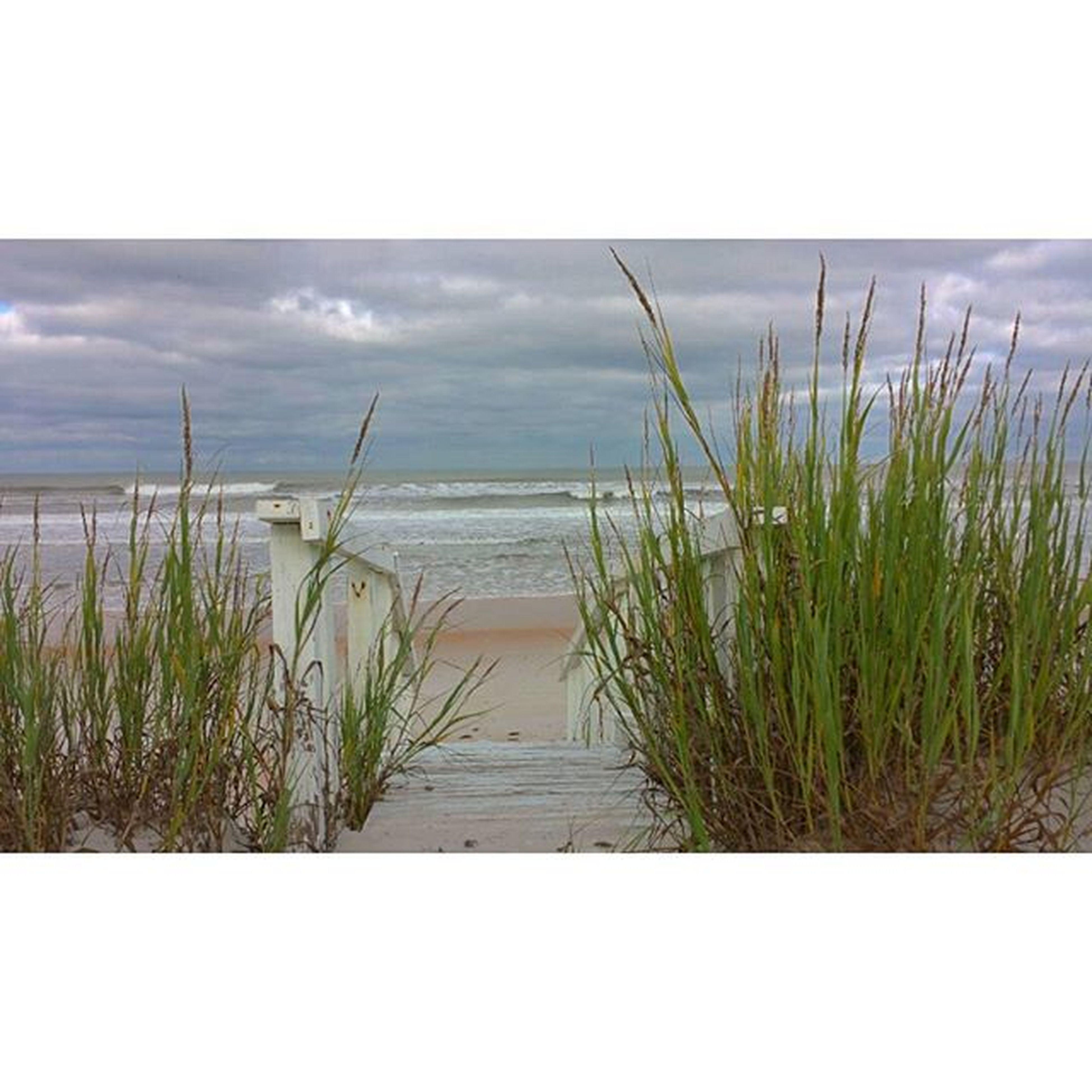 Somewhere on Old A1A. Beachlife Beach Stairway Ocean Coastal Shelling Nature Sanddunes Seaoats Outdoors Exploring Beachfront Cloudy Ilovestaugustine Olda1a Staugustine Igersstaugustine A1A Igersdaily Igers IGDaily Florida Pureflorida Roamflorida Ig_greatshots_fla iloveFL
