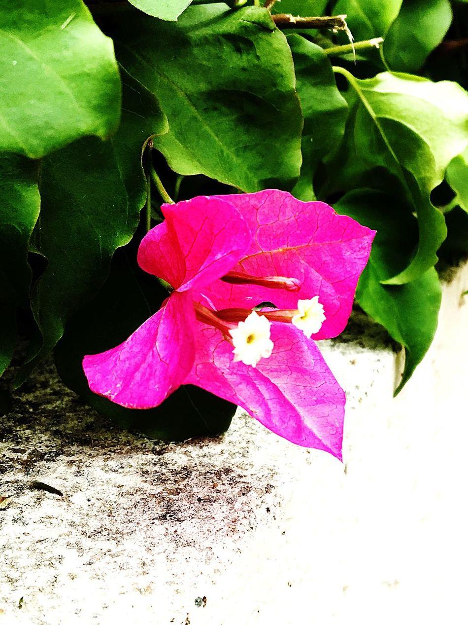 Where I Live Flowers, Nature And Beauty Artistic Expression Having Fun Flowers,Plants & Garden OceansideCA Best Eyeem Pics EyeEm Best Shots First Eyeem Photo Showcase July The Great Outdoors - 2016 EyeEm Awards Eyeem Market CaptureTheMoment