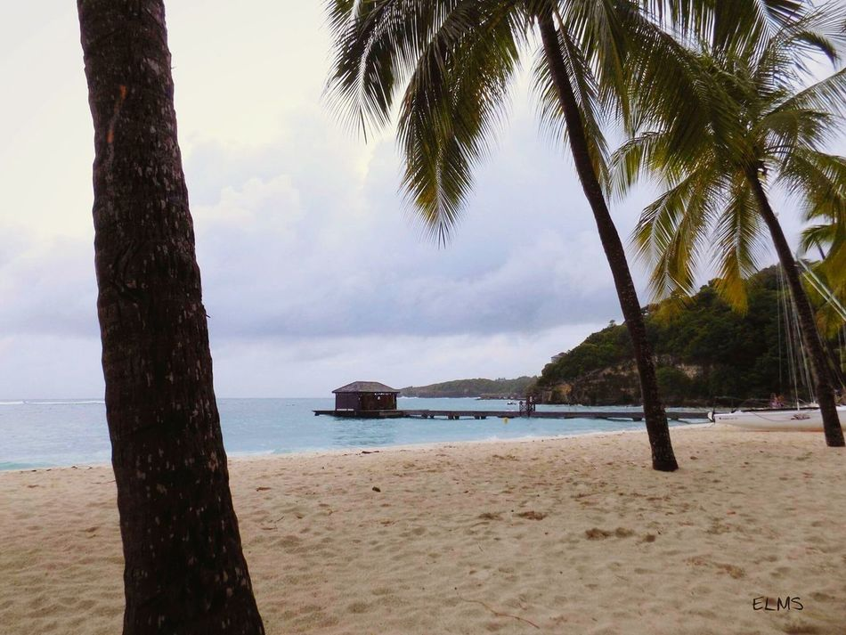 La Caravelle Beach Sea Travel Destinations Guadeloupe Guadeloupe-F.W.I Guadeloupeislands Gwada  Gwadalife Promo Guadeloupe Ig_guadeloupe Fwi French West Indies Caraïbes Caribbean Antilles Françaises Antilles Photography Photographer Sand Nature Tranquility ELMS Water Scenics EyeEmNewHere