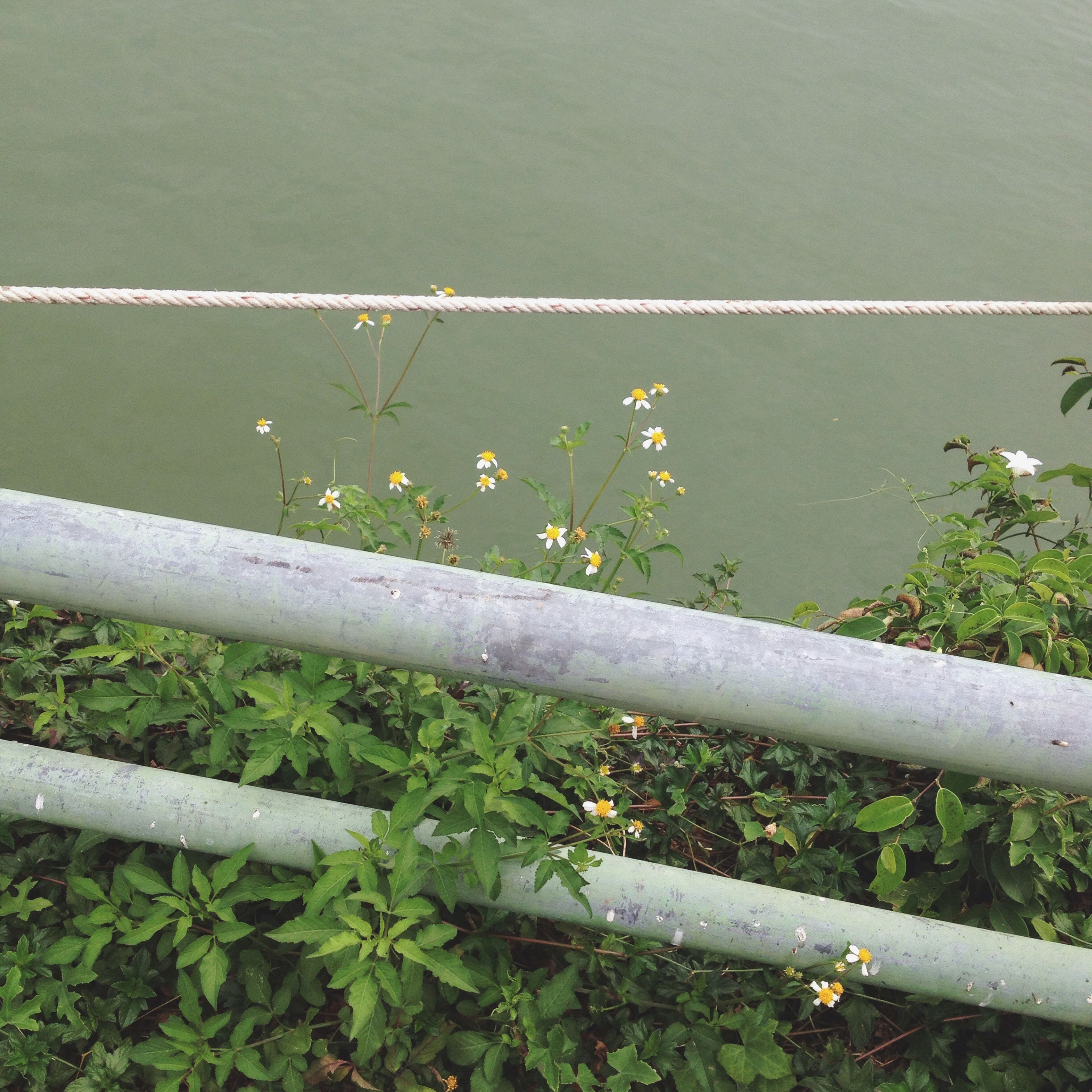 water, flower, plant, growth, high angle view, nature, railing, beauty in nature, tranquility, green color, freshness, day, outdoors, lake, leaf, no people, fragility, river, fence, grass