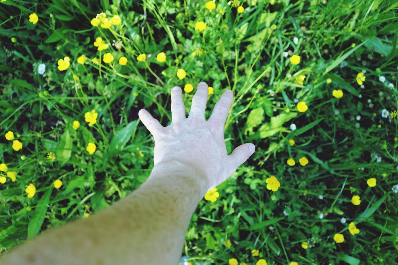 NATURE CONEXION Human Hand Human Body Part Human Finger One Person Personal Perspective Green Color Close-up Real People Outdoors Day Nature Grass One Man Only People Freshness Adult The Great Outdoors - 2017 EyeEm Awards Tree Scenics APOLO 3XSPUnity