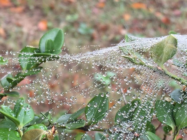 Web and dew Web Dew Nature Drop