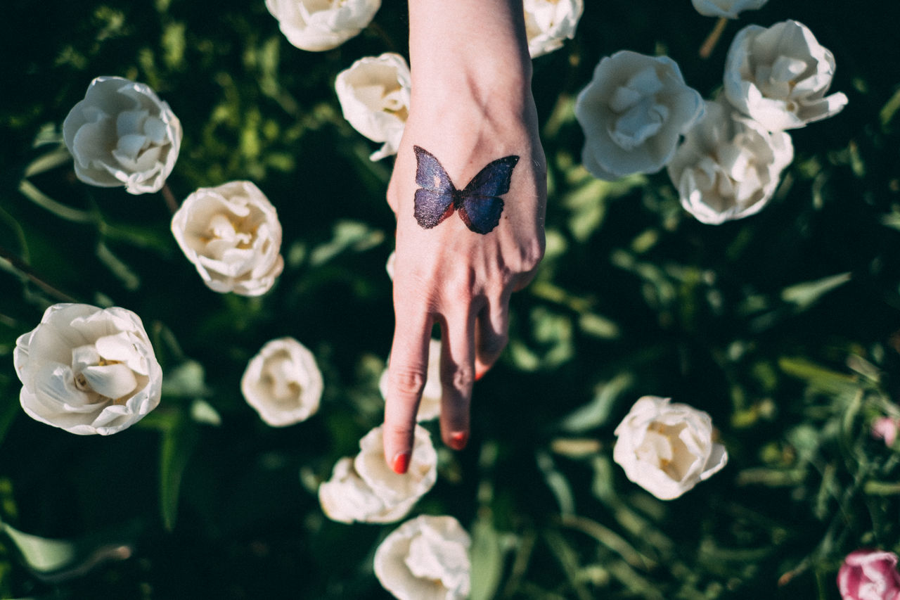 beauty in Nature Celebration close-up day flower fragility human body part human hand lifestyles Nature one person one woman only outdoors Plant real people rose - flower women