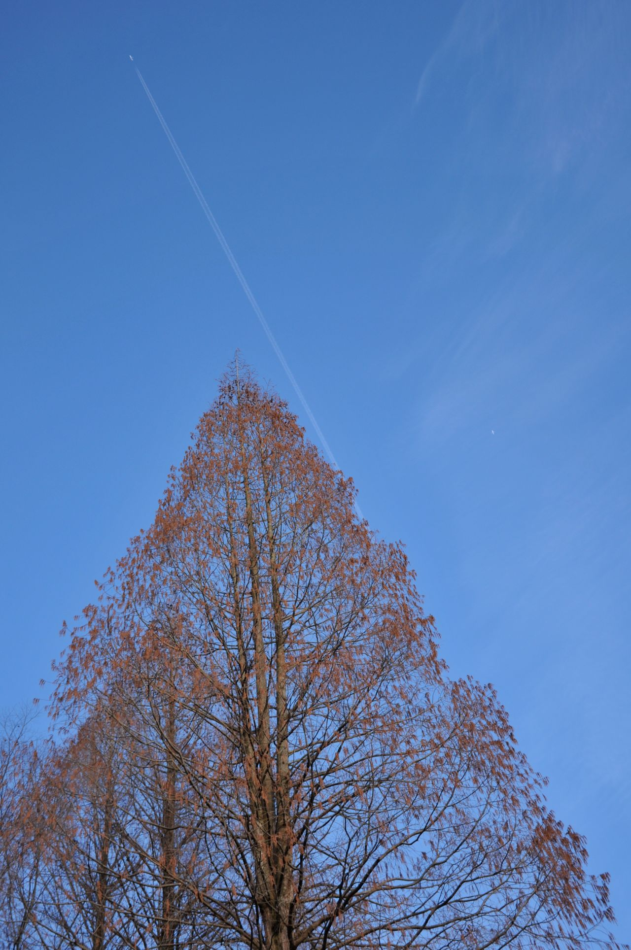 Blue Low Angle View Tree Nature Beauty In Nature No People Branch Sky Day Outdoors Plane Contrail