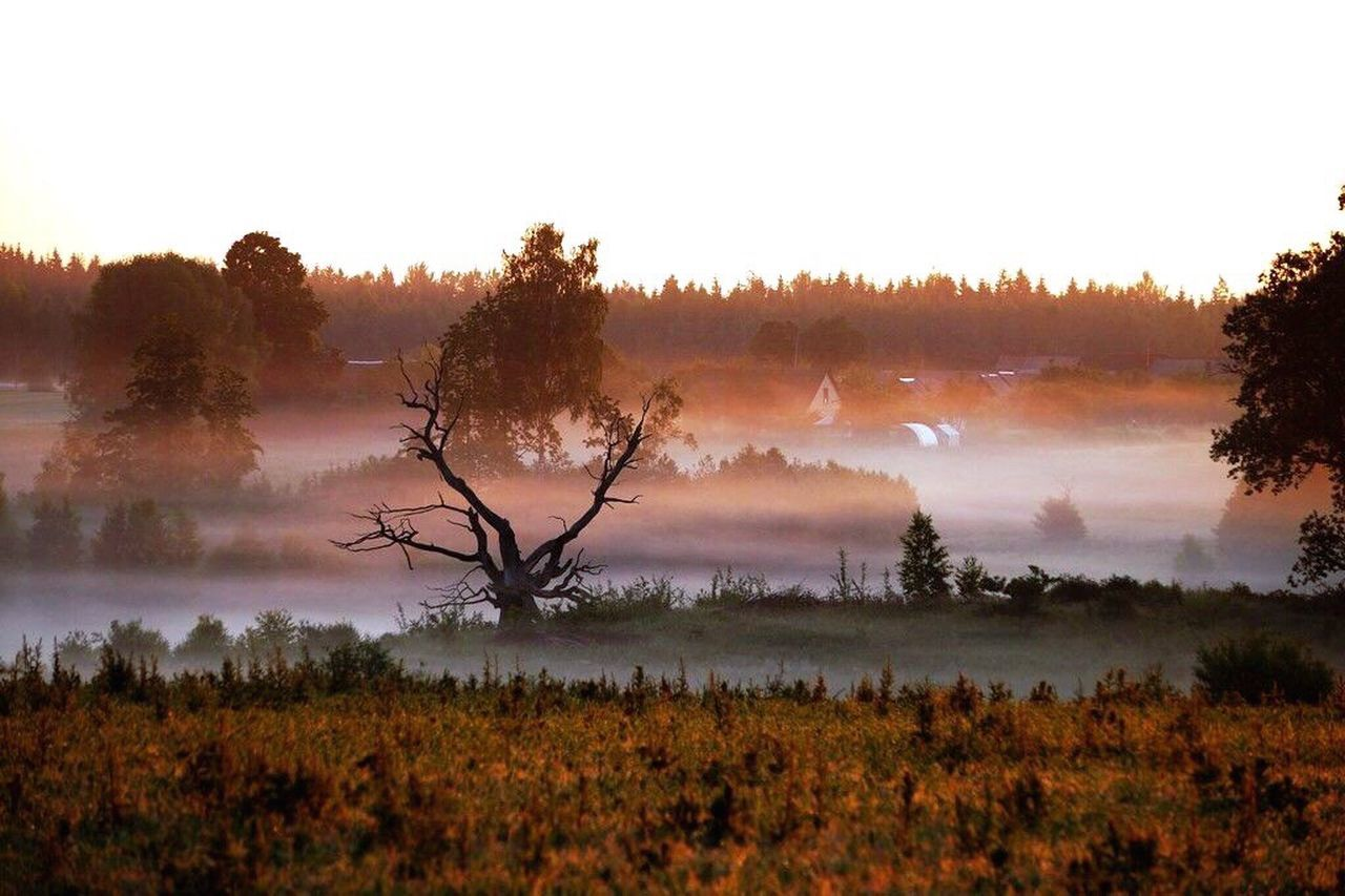 tree, nature, landscape, beauty in nature, tranquility, tranquil scene, scenics, no people, outdoors, field, sky, forest, growth, fog, grass, day